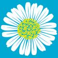 Custom two-color daisy. Customized t-shirt.