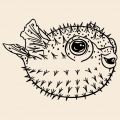 Fugu fish to print on t-shirt. Customize a t-shirt puffer fish, sea and ocean design.